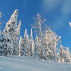 Frosty powder and blue sky, what could be better?